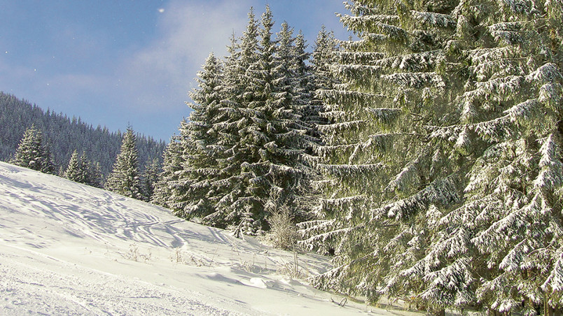 Fairy-tale winter in Carpathian mountains